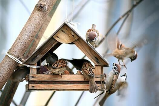 5 Easy DIY Bird Feeders Older Adults Can Make in Folsom's, CA